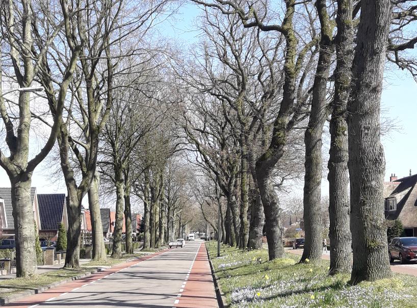 Карантин в Нидерландах: личный опыт.Вокруг Света. Украина