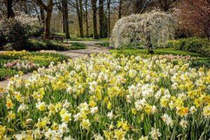 Королевский парк цветов в Нидерландах без туристов