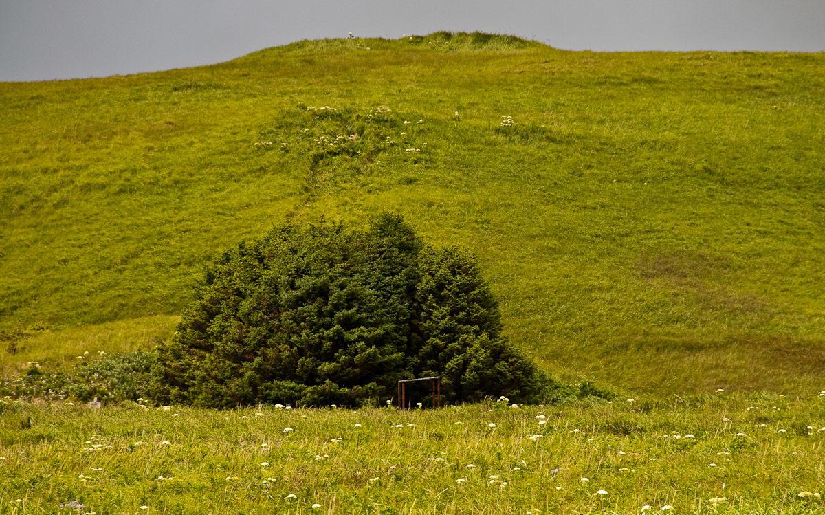33 сосны: самый маленький национальный лес США.Вокруг Света. Украина