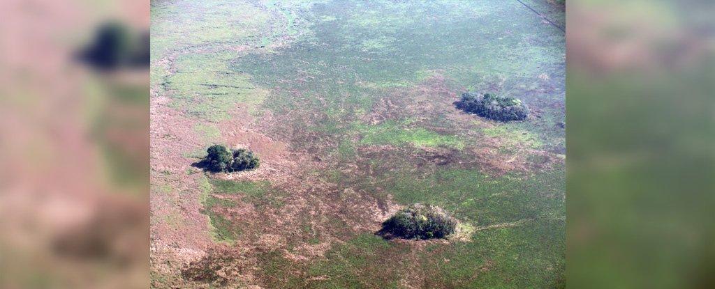 Жители Амазонии занимались земледелием еще 10 тысяч лет назад