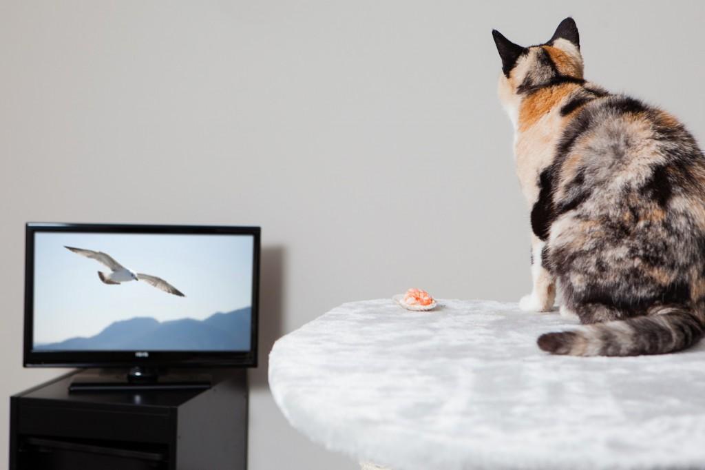 Британский отель размещает кошек бесплатно, если их хозяева больны