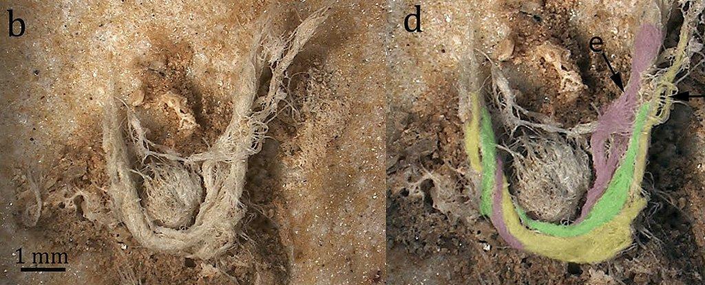 Археологи обнаружили нитки, изготовленные неандертальцами