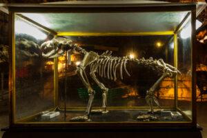 Пещерные медведи вымерли из-за слишком большого носа