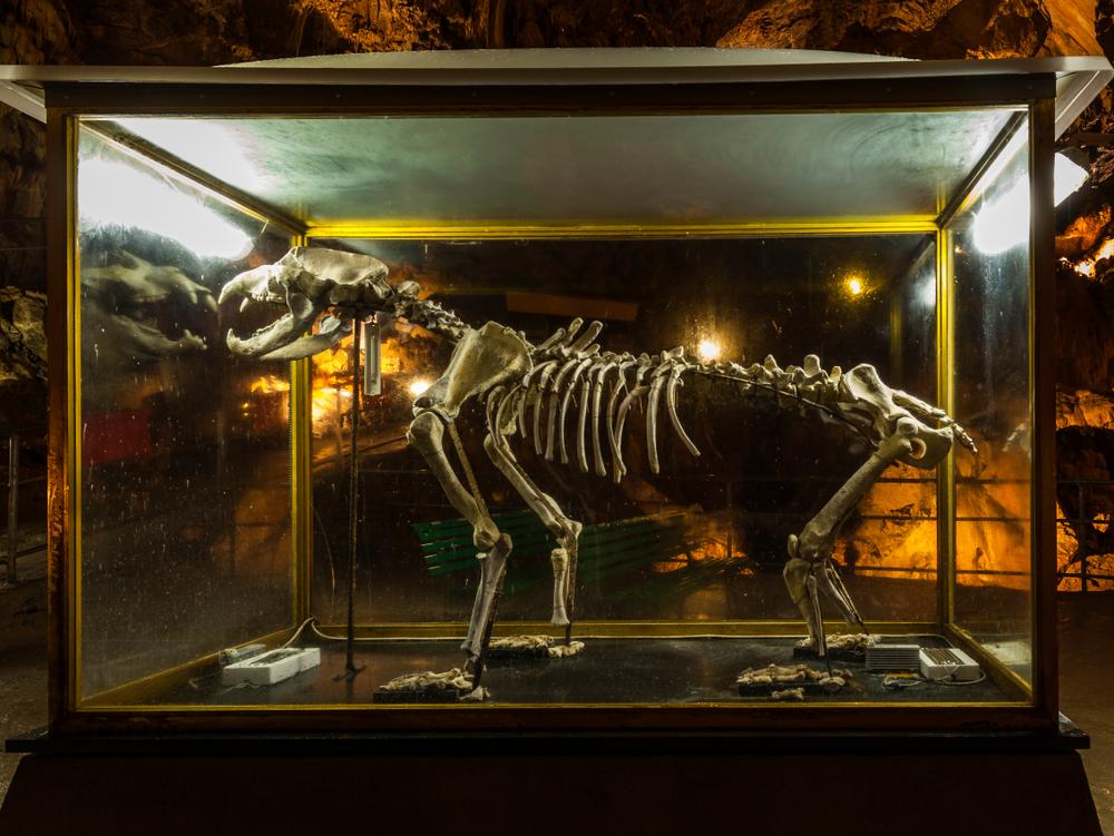 Пещерные медведи вымерли из-за слишком большого носа.Вокруг Света. Украина
