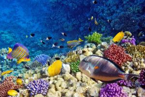 Экосистему океанов можно восстановить к 2050 году – эксперты