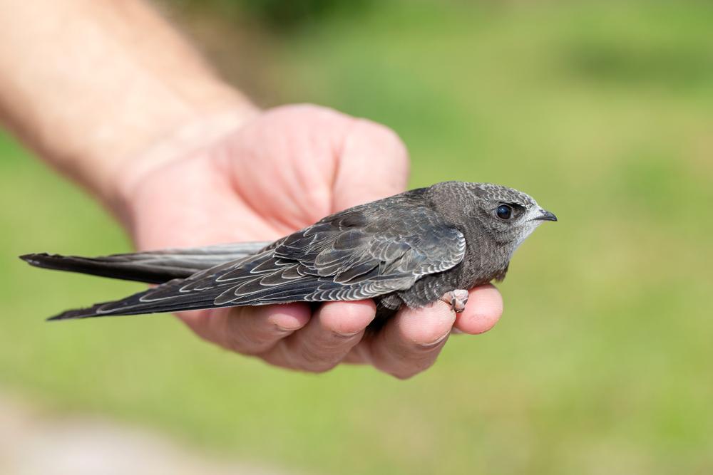 В Греции тысячи перелетных птиц погубил ветер