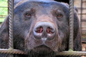 Як в Україні торгують дикими тваринами і чому це погано: пояснює WWF