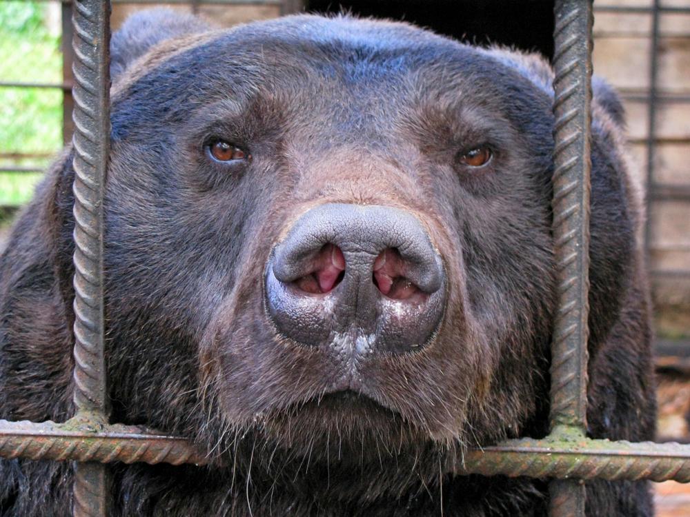Як в Україні торгують дикими тваринами і чому це погано: пояснює WWF.Вокруг Света. Украина