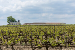 Виноградники Бордо сильно пострадали от града