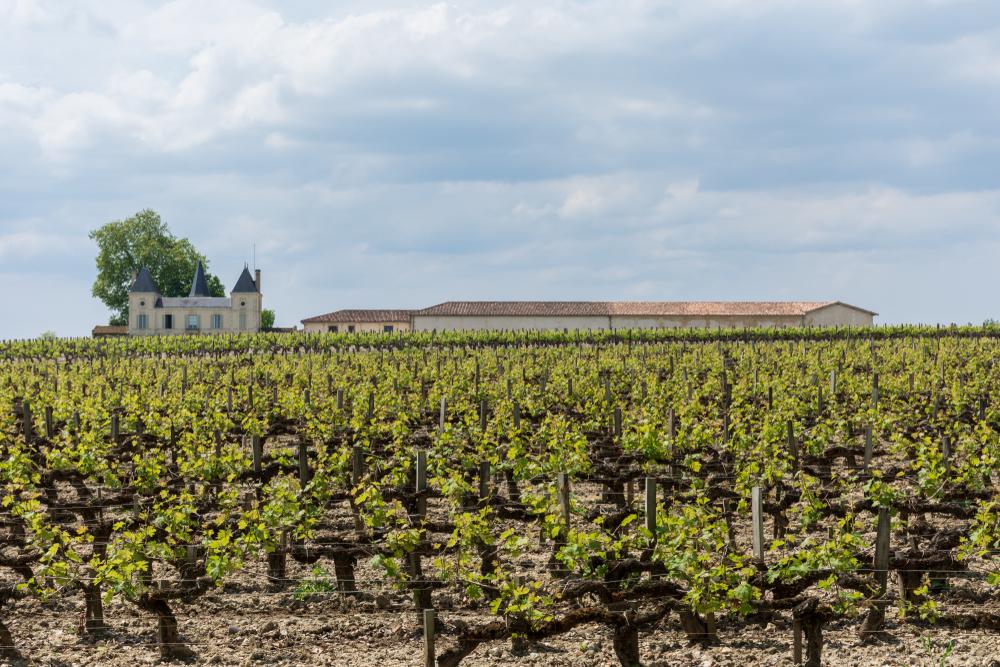 Виноградники Бордо сильно пострадали от града.Вокруг Света. Украина