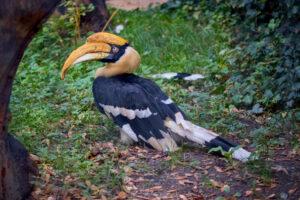 В Таиланде ветеринары напечатали птице клюв на 3D-принтере