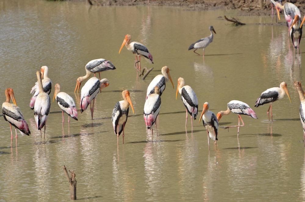 Пандемия провоцирует браконьерство в заказниках Камбоджи