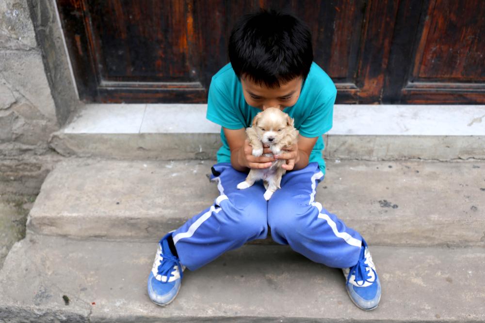 В Китае, наконец, запретили есть собак