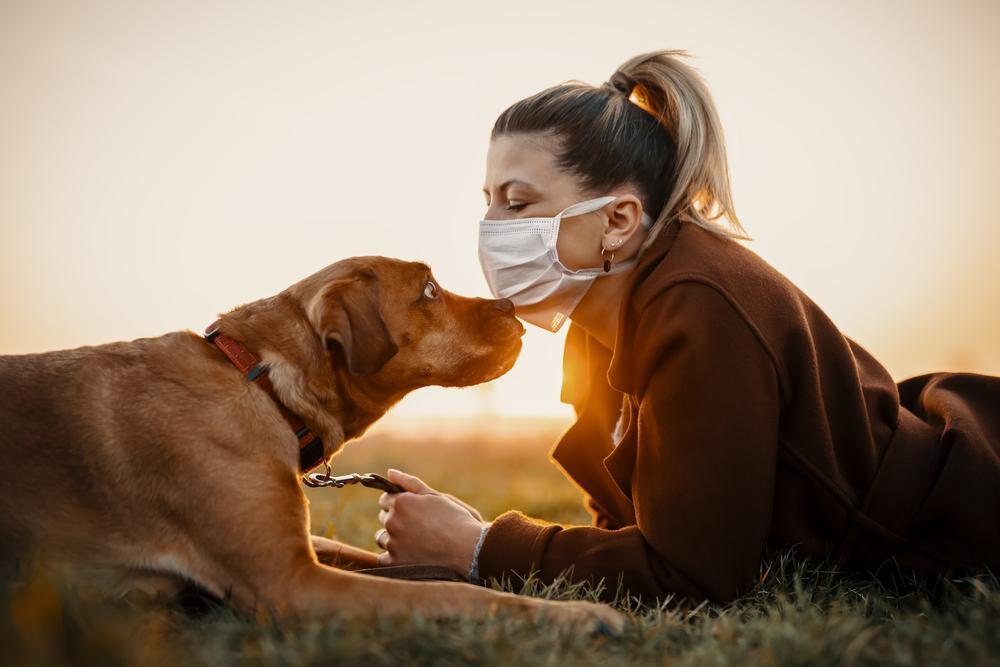 В Великобритании собак учат вынюхивать коронавирус