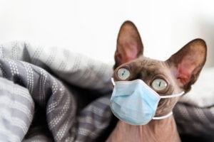 Болеют ли домашние животные Covid-19