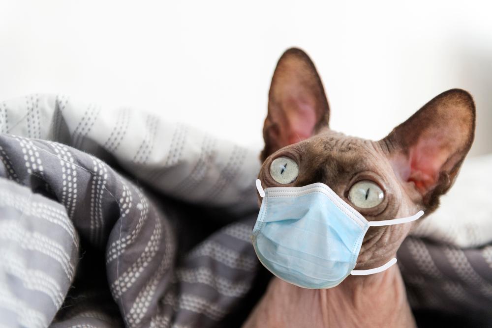 Болеют ли домашние животные Covid-19.Вокруг Света. Украина