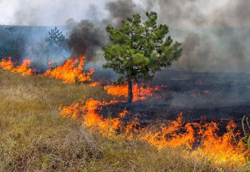 В Украине за поджог травы будут штрафовать на десятки тысяч гривен