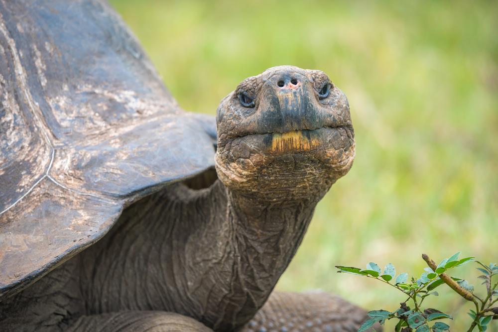 Итальянку оштрафовали за выгул черепахи.Вокруг Света. Украина