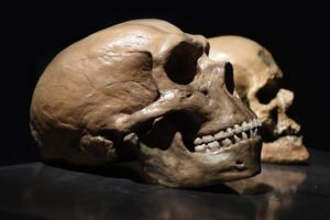 Неандертальцы вымерли из-за секса с людьми