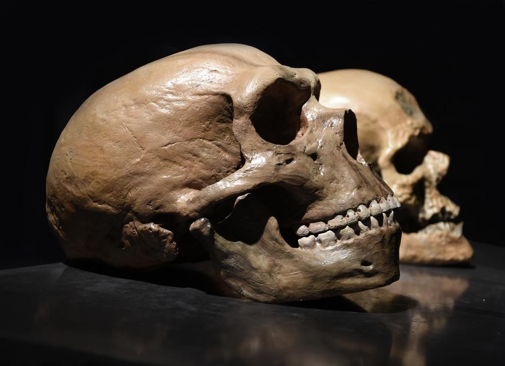 Неандертальцы вымерли из-за секса с людьми.Вокруг Света. Украина