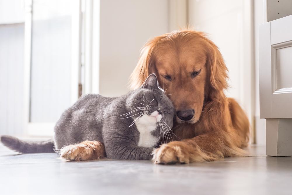 Китайский город запретил есть кошек и собак
