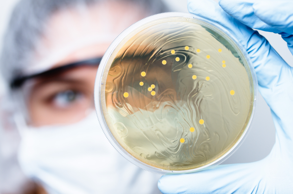 У бактерий нашли подобие памяти