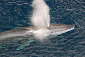 К Марселю приплыли киты: редкое видео