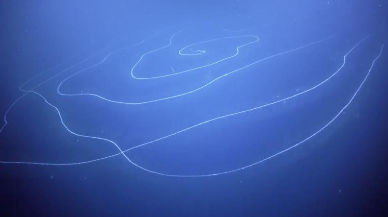 У побережья Западной Австралии заметили причудливое морское существо