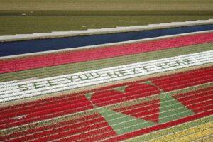 Нидерландские фермеры передали тюльпановый привет миру