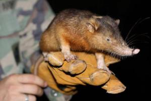 Странные животные подвержены высокому риску вымирания