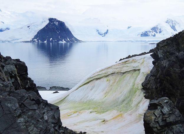 Из космоса видно, как Антарктида позеленела от водорослей