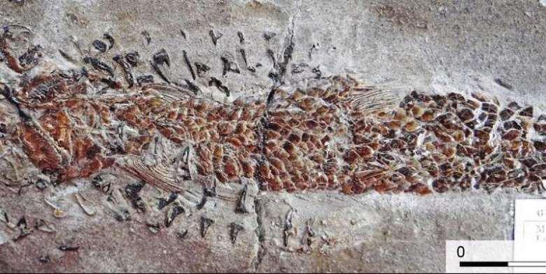Найдена окаменелость древнего кальмара, подавившегося рыбой.Вокруг Света. Украина