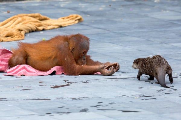 Животные, которые подружились благодаря карантину: забавные фото