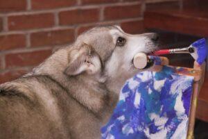 В Вашингтоне собака рисует картины для торговцев марихуаной