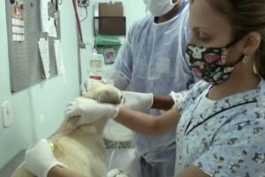 В Рио запустили проект по доставке приютских животных в семьи