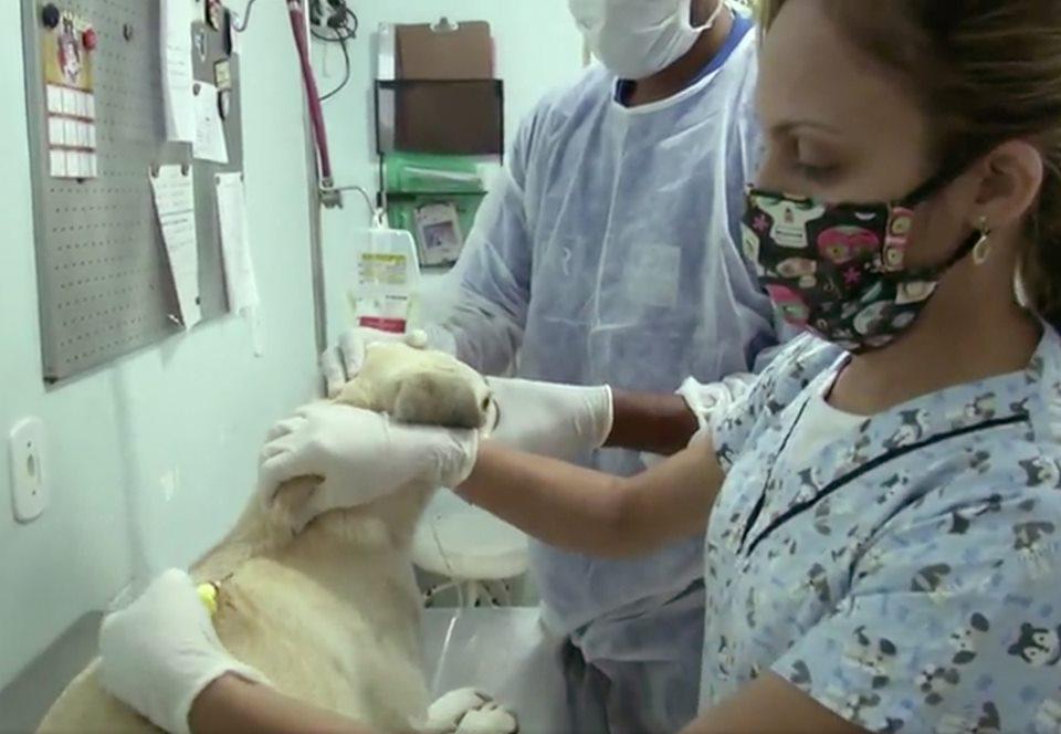 В Рио запустили проект по доставке приютских животных в семьи.Вокруг Света. Украина