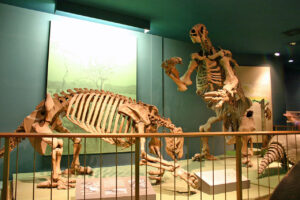 Древние гигантские ленивцы отравились собственными фекалиями