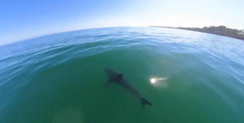 У курортного побережья Испании заметили огромных акул
