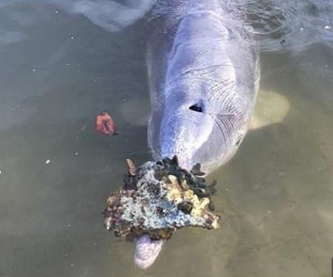 В Австралии дельфин приносит к берегу подарки, чтобы вернулись туристы