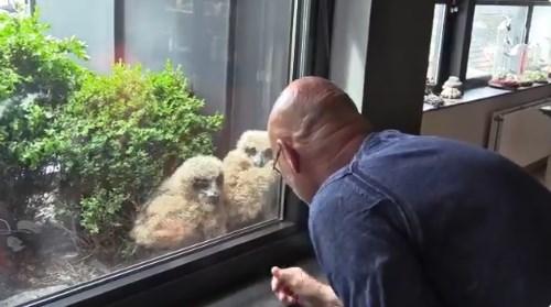 В Бельгии сова свила гнездо с видом на телевизор