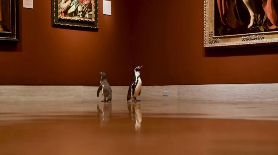 В Канзасе пингвинов пригласили на экскурсию в музей