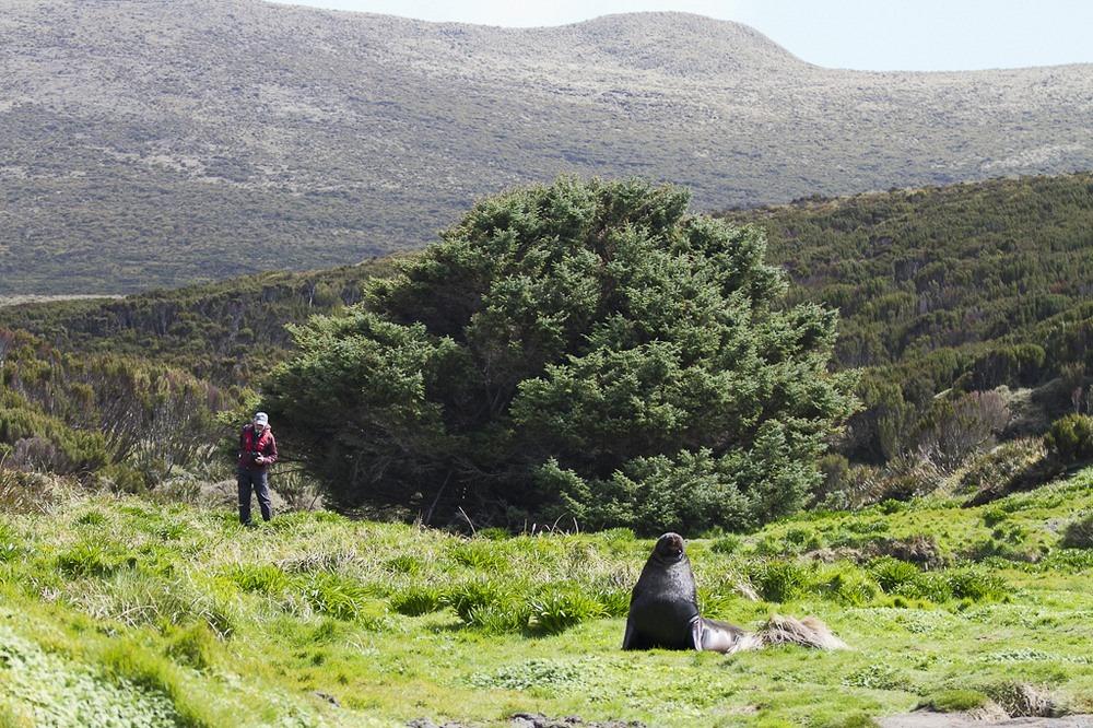 Найдено самое одинокое дерево на свете