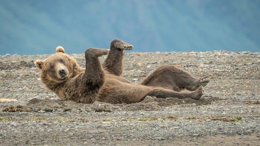 Смешно до слез: закулисье конкурса комичных фото дикой природы