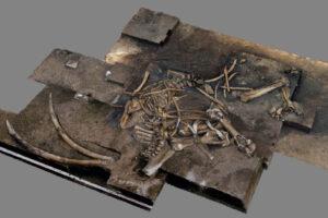 В Германии нашли скелет вымершего слона