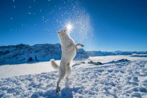 Фотограф и ее очаровательная собака вдохновляют видами Швейцарии