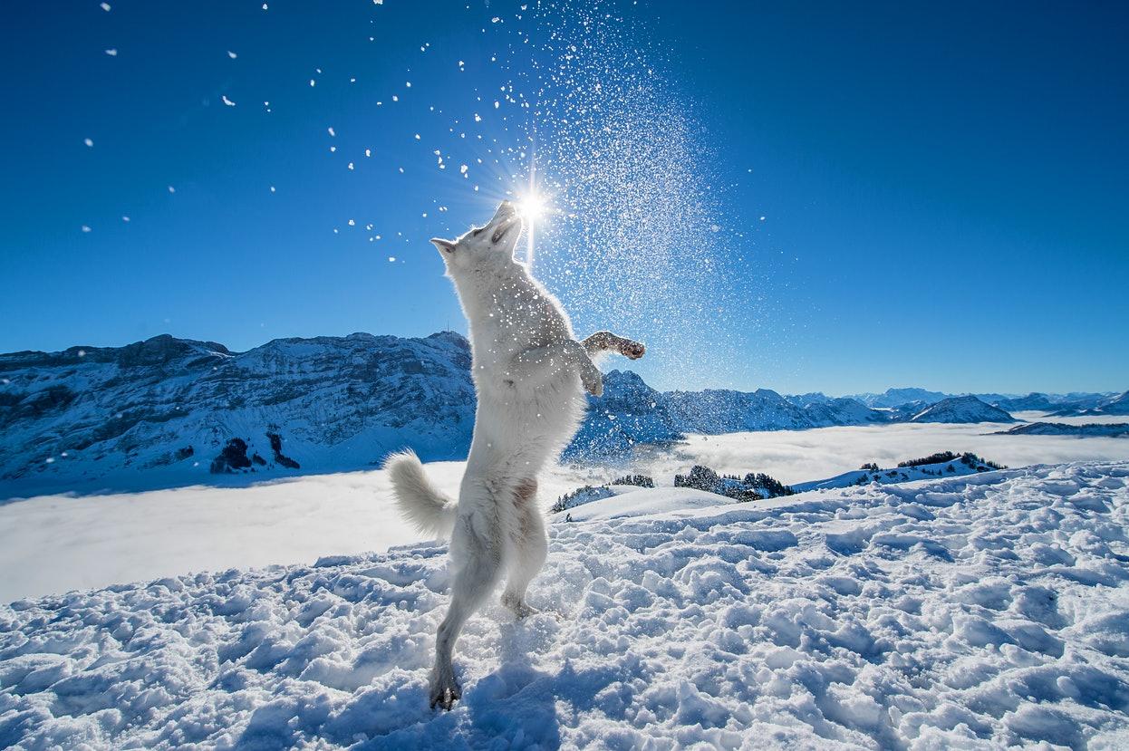 Фотограф и ее очаровательная собака вдохновляют видами Швейцарии.Вокруг Света. Украина
