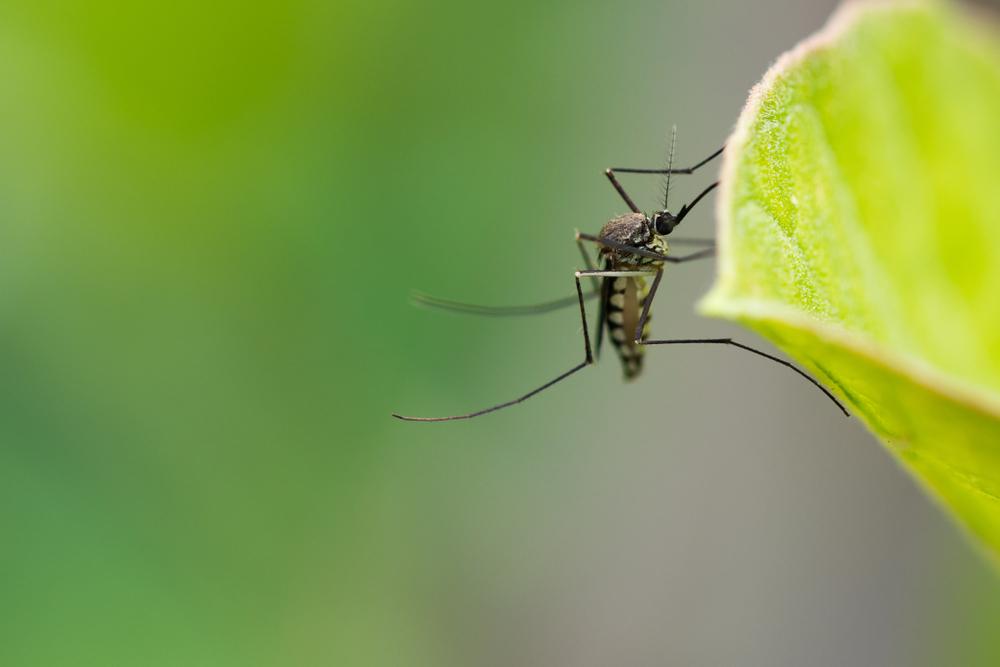 Ученые нашли микроб, который остановит малярию