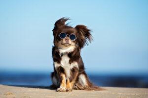 Собаки испытывают эмоциональные трудности в период полового созревания - прямо как люди