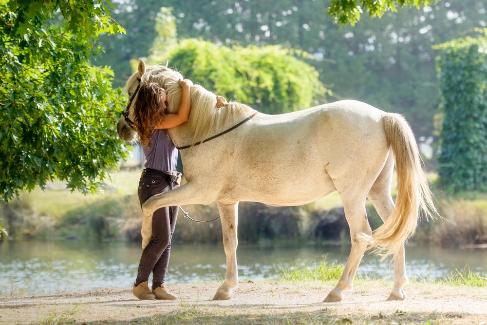 Лошади узнают фото своих владельцев даже спустя месяцы разлуки