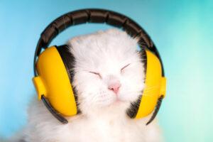 К ветеринару с песней: кошкам написали особую музыку